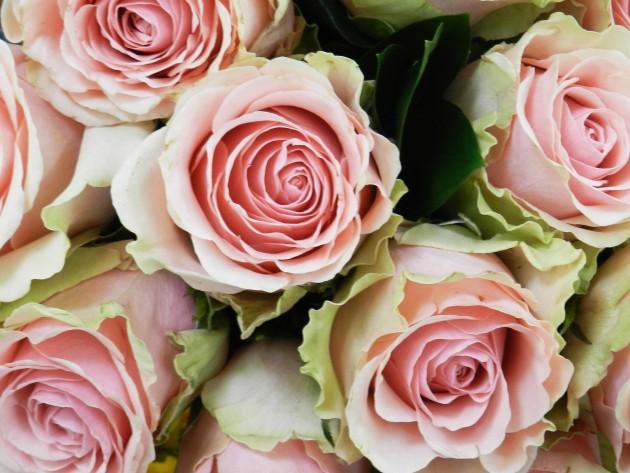 華やかなローズフロラールの香り画像