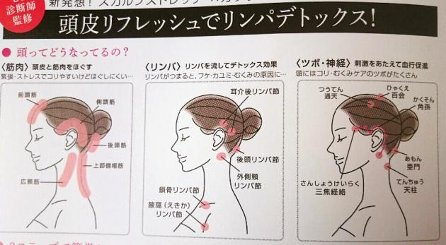 頭の構造 画像