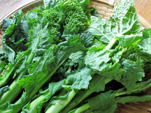 「ダッチ―」野菜画像