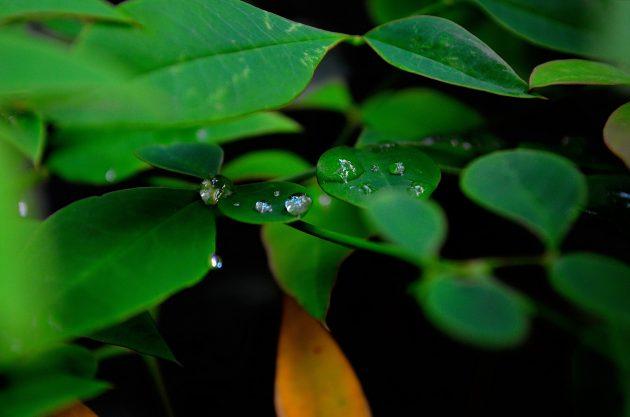 梅雨時期画像