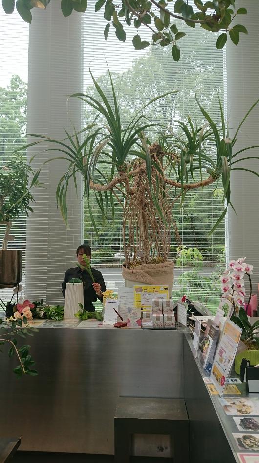 高額な50万~100万円くらいの観葉植物