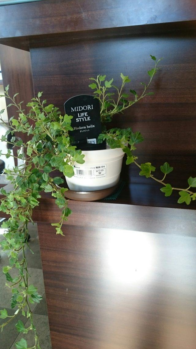 ヘアサロンウェーブの観葉植物